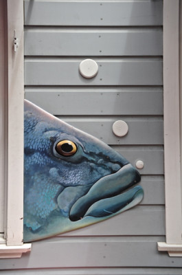 Stillwell,Blue_Fish