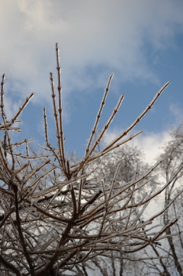 Stillwell_Iced_Trees2