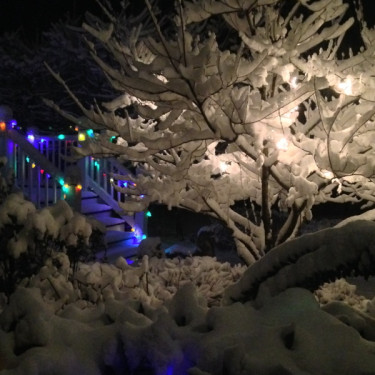 Stillwell_Snow_Tree_Colors