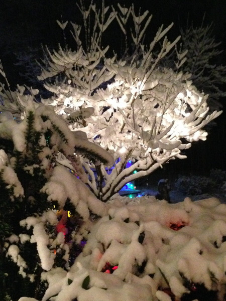 Stillwell_Snow_Tree_Colors2