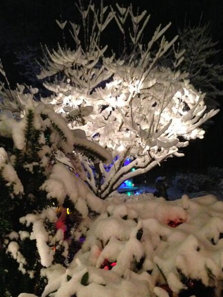Stillwell_Snow_Tree_Colors2