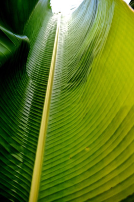 Stillwell_TravelingPalmLeaf