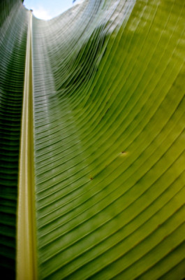 Stillwell_TravelingPalmLeaf2