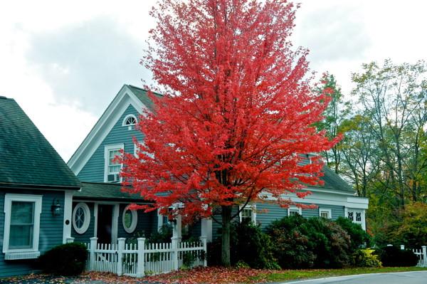 Stillwell,FallFoliage