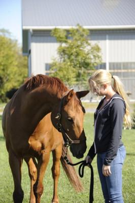 Stillwell_Horse_Chestnut_Antolin