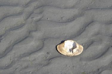 Stillwell_ME_Mudflat_Crab_Shell2
